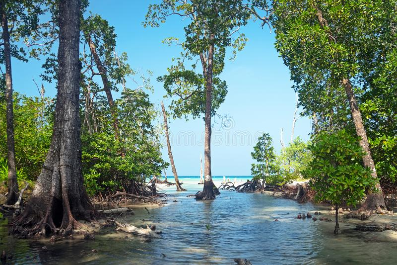 El bosque del mangle es árboles ricos y rodeados fotos de archivo libres de regalías