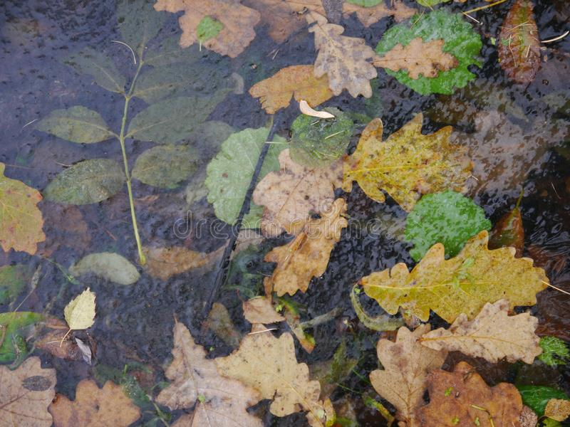 El bosque del otoño clasificado se va bajo opinión superior del hielo fotos de archivo
