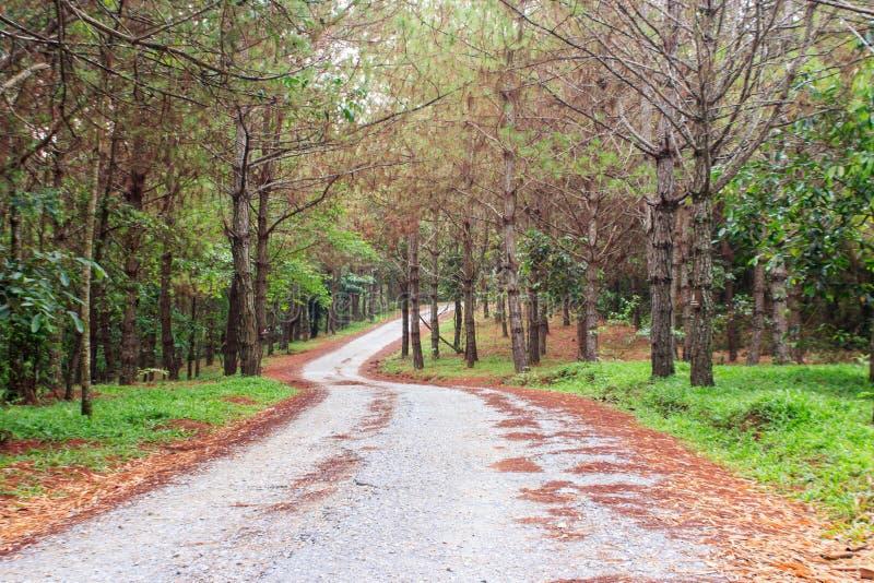 El bosque del pino con verde se va a lo largo de pista de senderismo del bosque que camina imagenes de archivo