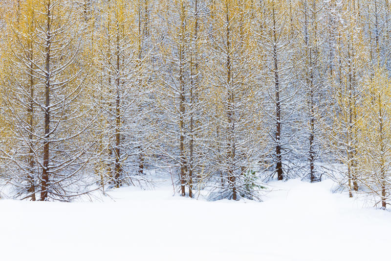 El bosque en francés Alpes imagen de archivo libre de regalías