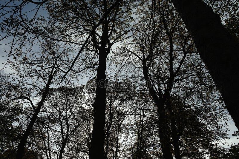El bosque en París francia imágenes de archivo libres de regalías