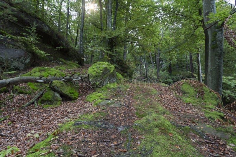 el bosque latin singles Ver en el bosque (into the woods) (into the woods) online en español latino y en el bosque (into the woods) online en español castellano.