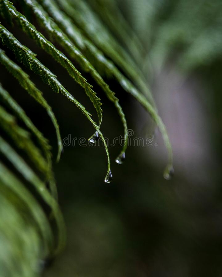 El bosque hermoso de Nueva Zelanda con lluvia cae el relleno de los helechos fotografía de archivo libre de regalías