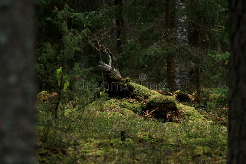 El bosque mágico foto de archivo libre de regalías