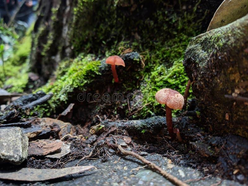 El bosque minúsculo de la seta foto de archivo libre de regalías