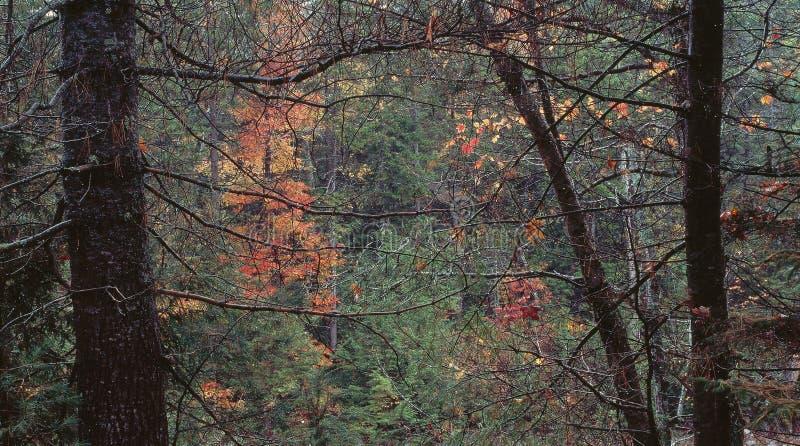 El bosque otoñal en las caídas acumula el rastro, bosque del Estado blanco de la montaña, New Hampshire imágenes de archivo libres de regalías