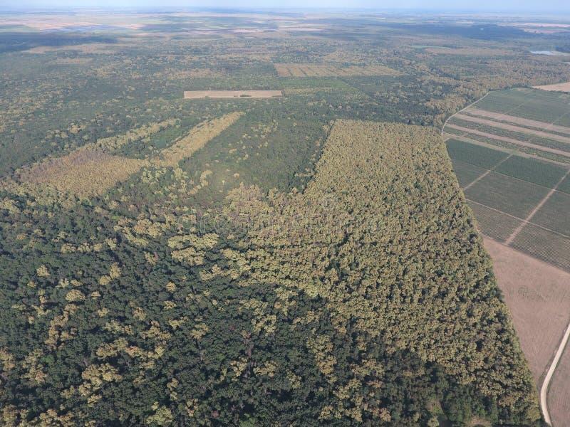 El bosque rojo del bosque cerca del arroz coloca Paisaje con una opinión de ojo de pájaro foto de archivo
