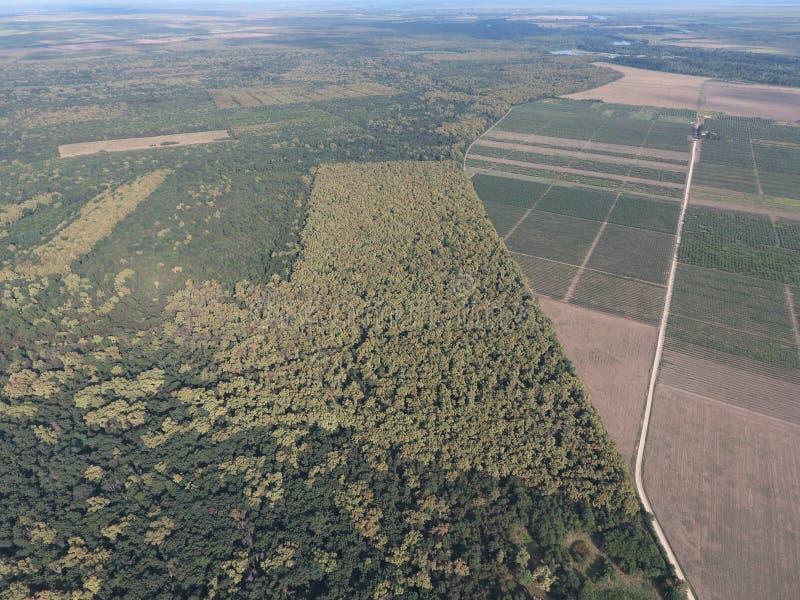 El bosque rojo del bosque cerca del arroz coloca Paisaje con una opinión de ojo de pájaro imagen de archivo