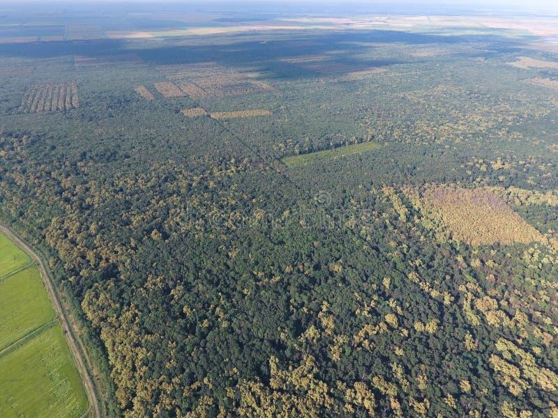 El bosque rojo del bosque cerca del arroz coloca Paisaje con una opinión de ojo de pájaro foto de archivo libre de regalías