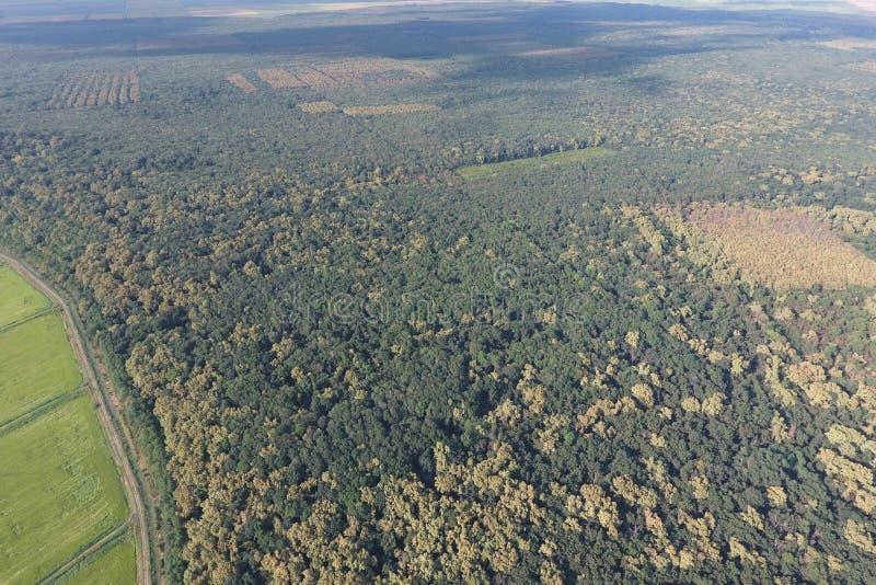 El bosque rojo del bosque cerca del arroz coloca Paisaje con el ojo de un pájaro fotos de archivo libres de regalías