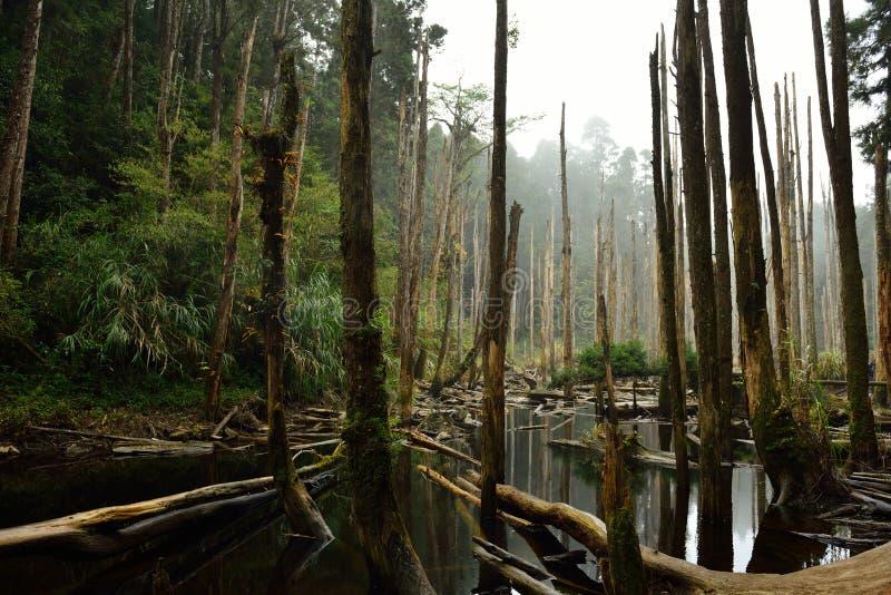 El bosque se enciende para veinte millas fotos de archivo