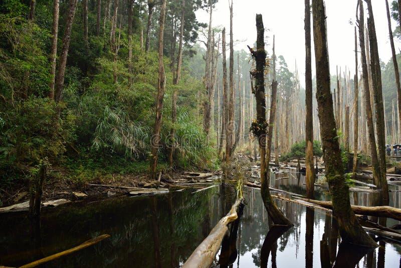 El bosque se enciende para veinte millas foto de archivo libre de regalías