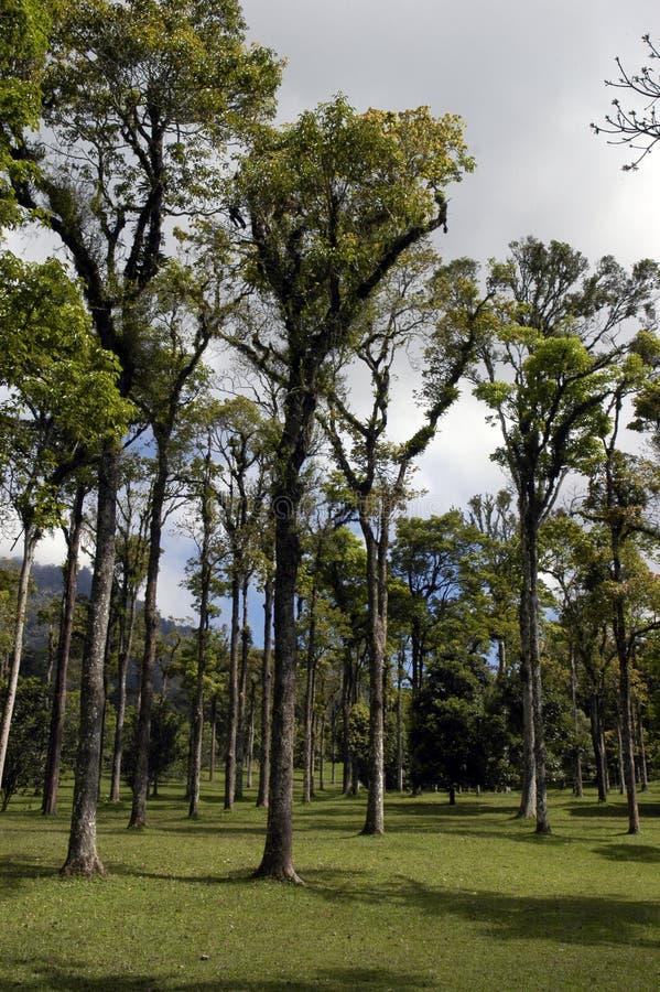 El bosque tropical fotografía de archivo libre de regalías