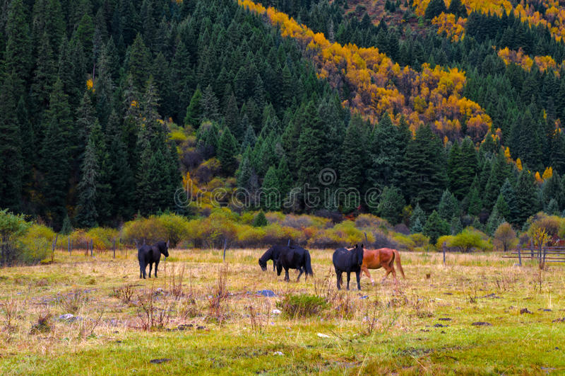 El bosque y el caballo colorized fotos de archivo libres de regalías