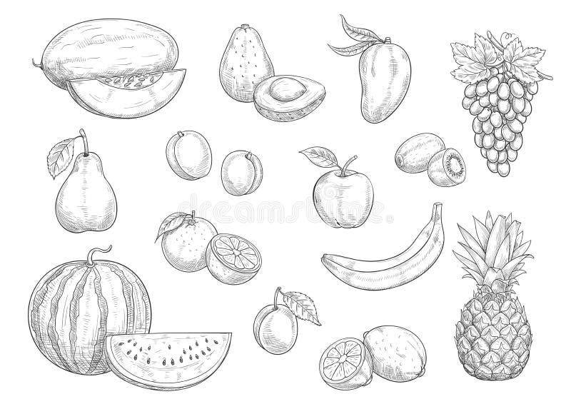 El bosquejo aislado fruta fijó para la comida, diseño del jugo libre illustration