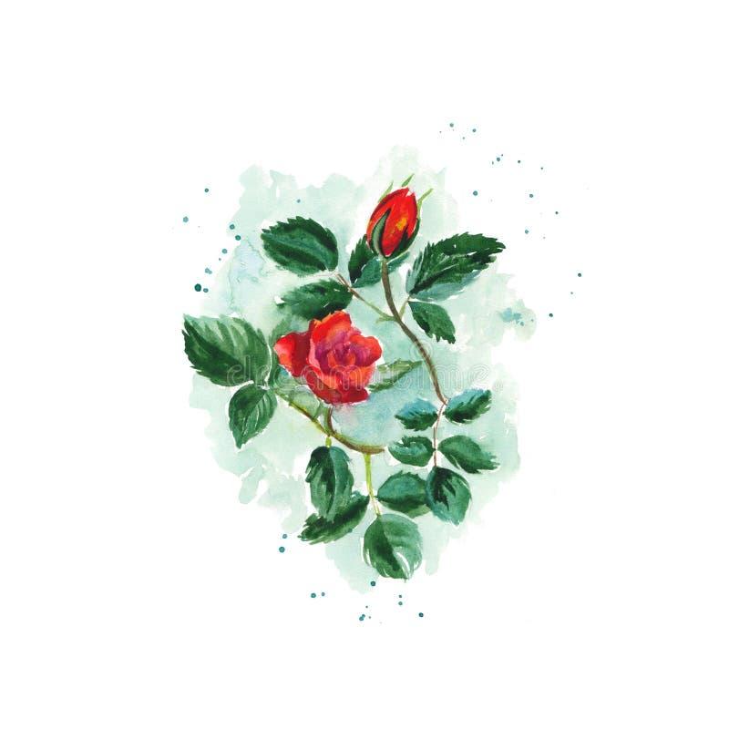 El bosquejo de la acuarela de un arbusto subió libre illustration