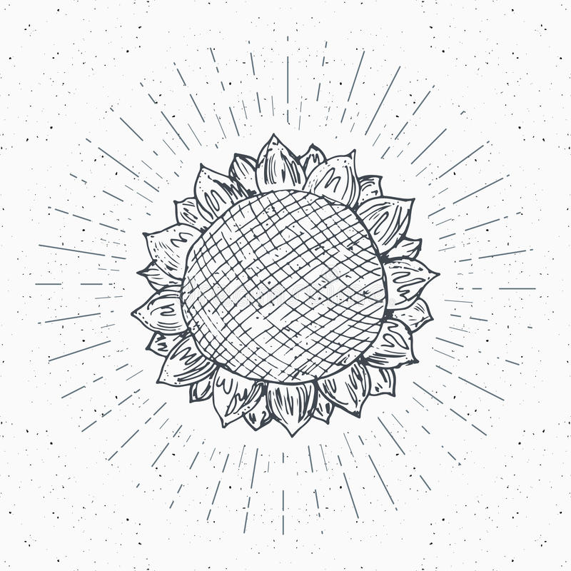 El bosquejo del girasol, etiqueta del vintage, grunge dibujado mano texturizó la insignia, plantilla retra del logotipo, ejemplo  libre illustration