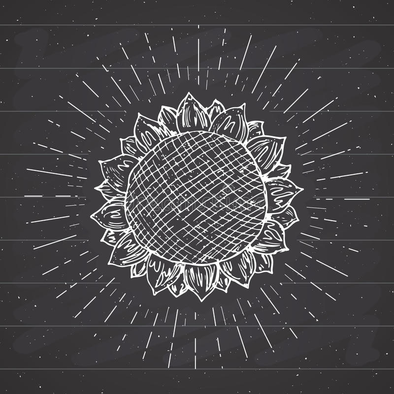 El bosquejo del girasol, etiqueta del vintage, grunge dibujado mano texturizó la insignia, plantilla retra del logotipo, ejemplo  stock de ilustración