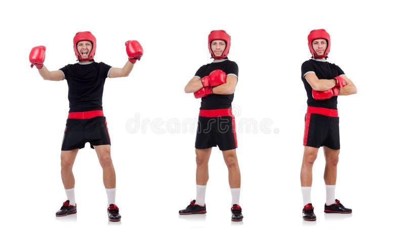 El boxeador divertido en el blanco fotos de archivo libres de regalías
