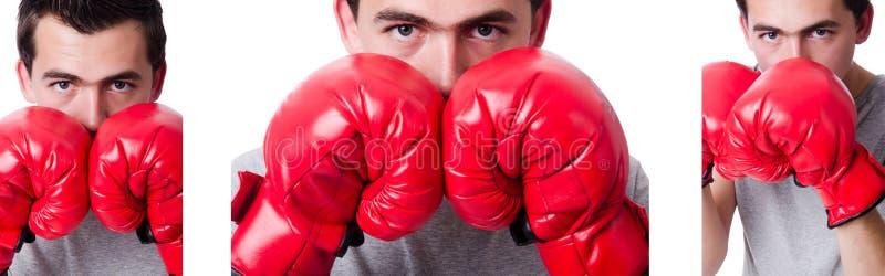 El boxeador que se prepara para el torneo aislado en blanco fotos de archivo