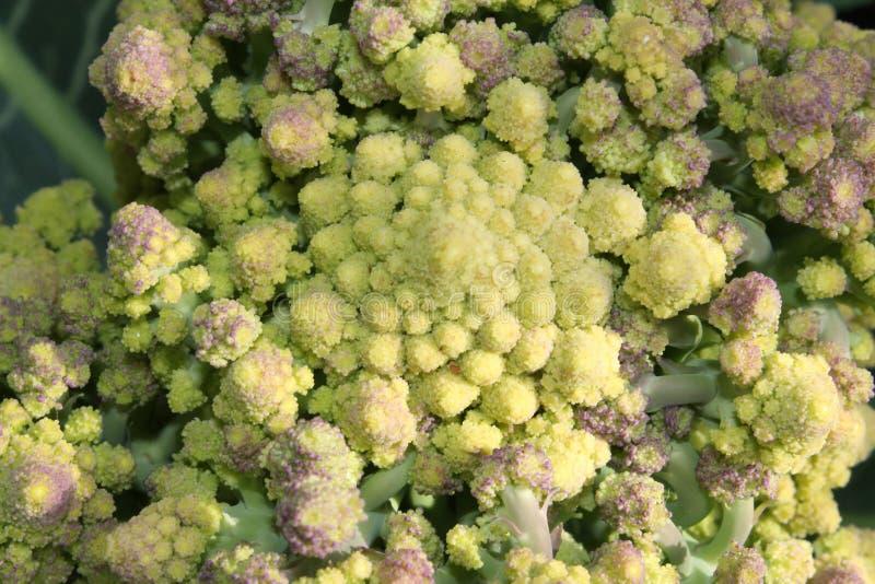El bróculi del Romanesque tiene un modelo de la geometría cerca de un fractal fotos de archivo