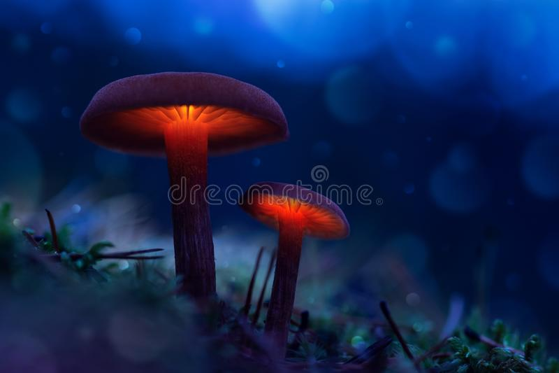 El brillar intensamente prolifera rápidamente en un bosque de hadas el mundo mágico de la seta imagenes de archivo
