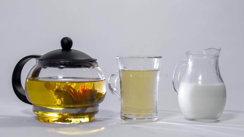 El brote chino del té verde florece en una tetera de cristal Taza de té, un jarro de leche imagenes de archivo