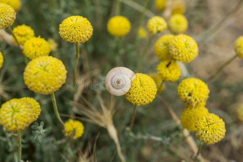 El brote de flor con un caracol de tierra blanco pegó la visión superior imágenes de archivo libres de regalías