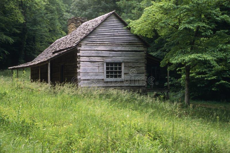 El brote Ogle el lugar fotografía de archivo libre de regalías