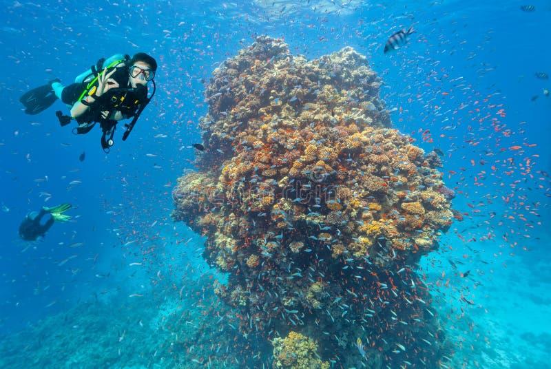 El buceador explora un arrecife de coral que muestra la muestra aceptable imagen de archivo libre de regalías