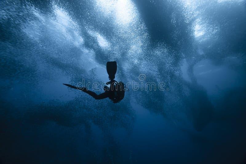 Buceador y funcionamiento de las sardinas fotografía de archivo libre de regalías