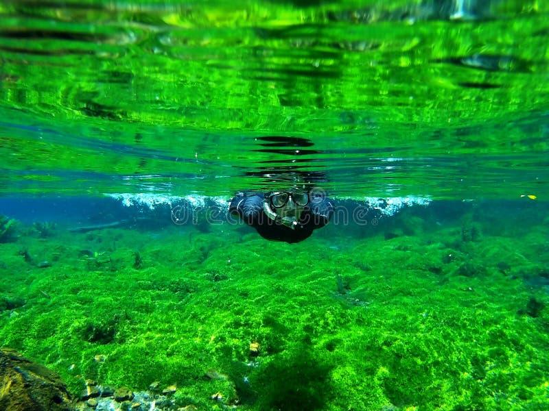 El bucear en una primavera de un río foto de archivo
