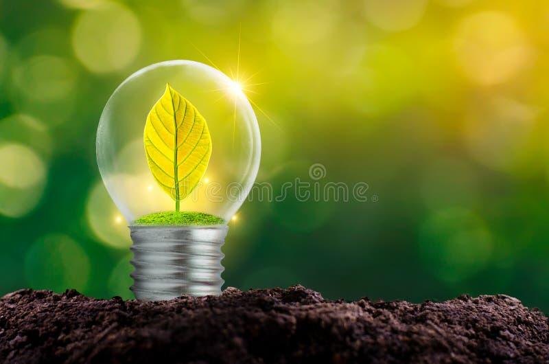 El bulbo está situado en el interior con el bosque de las hojas y los árboles están en la luz Conceptos de protección y de gl amb imágenes de archivo libres de regalías