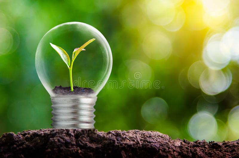 El bulbo está situado en el interior con el bosque de las hojas y los árboles están en la luz Conceptos de protección y de gl amb imagen de archivo