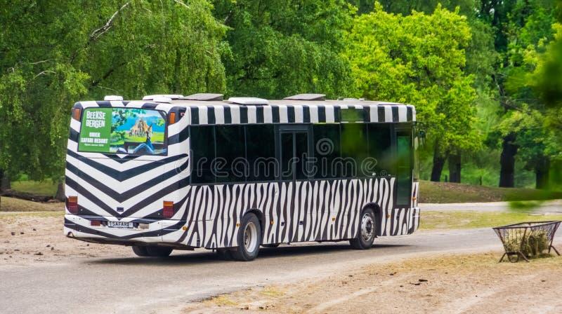 El bus turístico del safari con el estampado de zebra que conduce en el beekse Bergen, Hilvarenbeek, 25 del safaripark puede, 201 fotografía de archivo