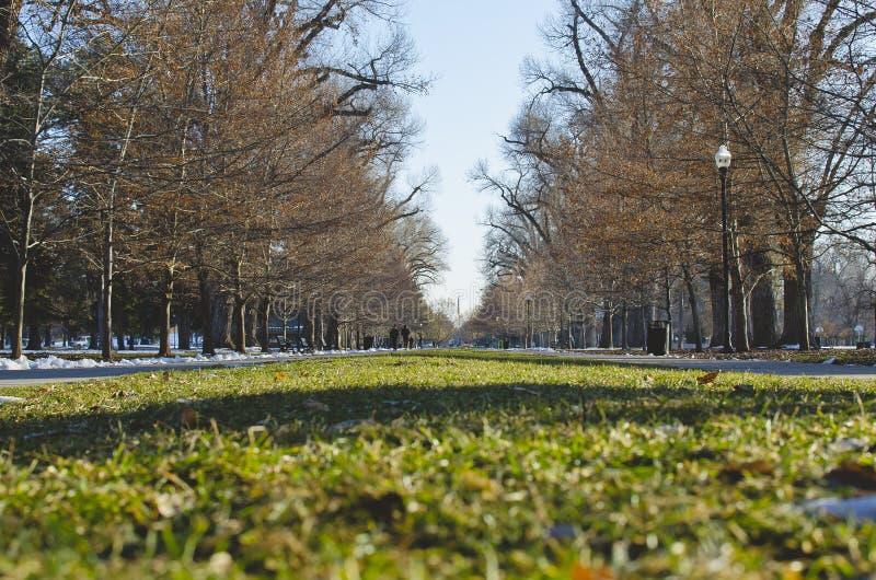 El césped del parque debajo de los árboles alineados finos fotografía de archivo libre de regalías