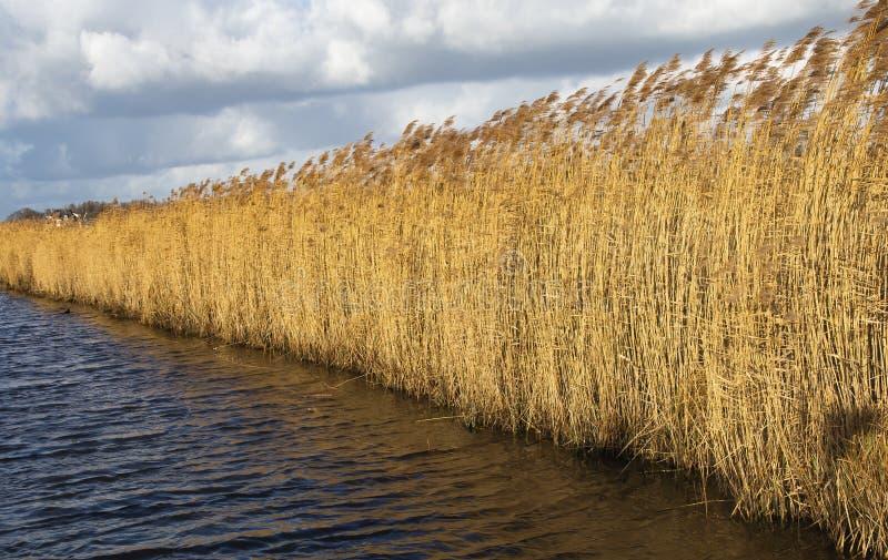 El césped largo del molino de Windmill Holland o Nederland Kinderdijk, declarado Patrimonio de la Humanidad por la UNESCO fotos de archivo