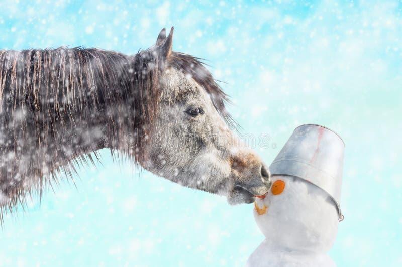 El caballo arranca con los dientes el muñeco de nieve de la nariz, invierno de la nieve imagen de archivo libre de regalías
