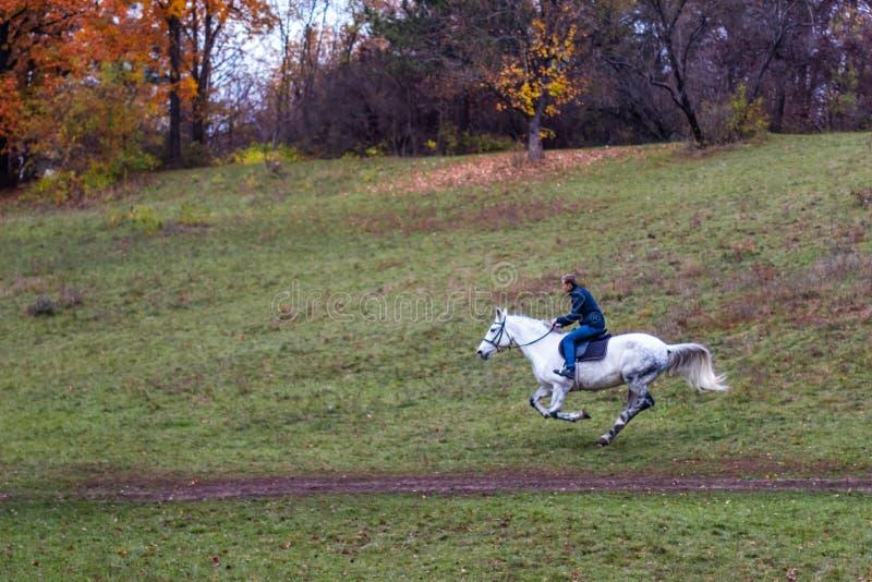 El caballo blanco que corre en el hombre del whith del bosque en la parte posterior Paisaje del outumn de Betuful Uman, Ucrania E fotos de archivo libres de regalías