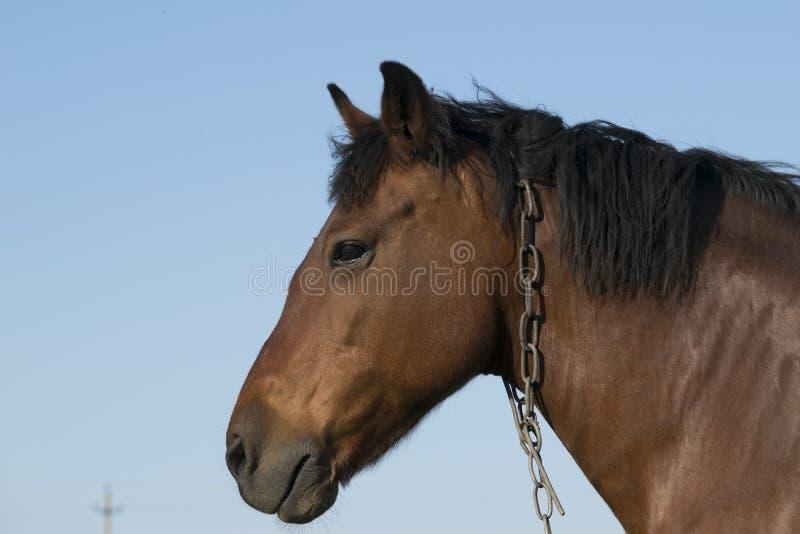 El caballo come la hierba y la presentación fotos de archivo