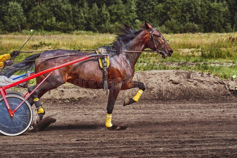 El caballo corre en la velocidad a lo largo de la pista de la pista fotografía de archivo libre de regalías