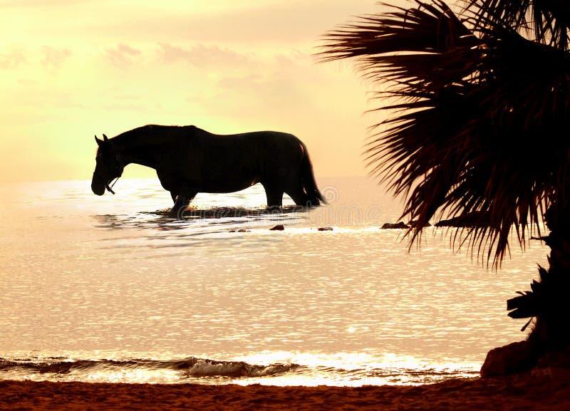 El caballo en puesta del sol marina fotografía de archivo