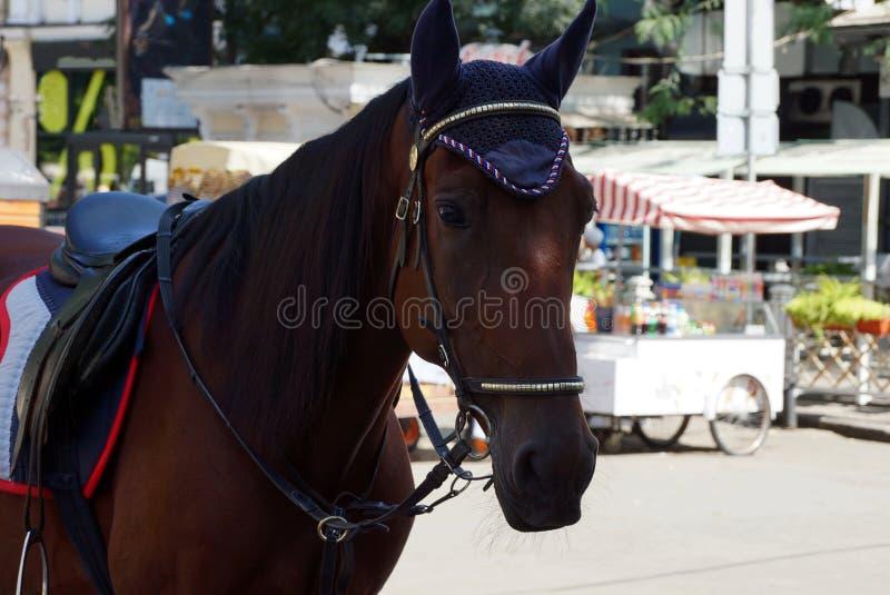 El caballo marrón hermoso en arnés se coloca en la calle foto de archivo libre de regalías