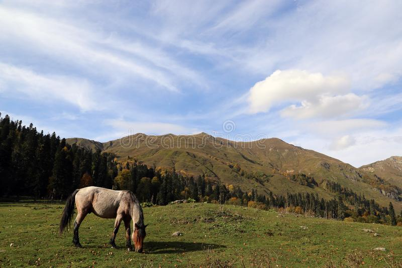El caballo pasta en las montañas del Cáucaso del otoño fotos de archivo libres de regalías