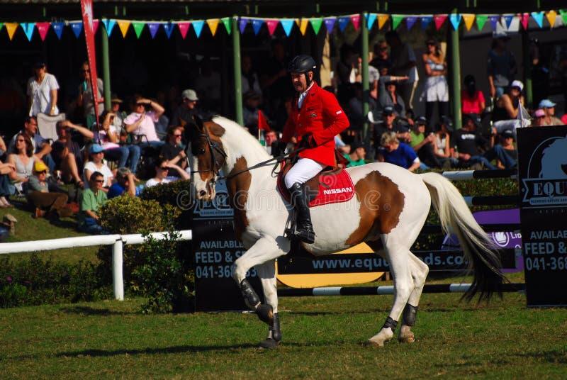 El caballo que salta - Barry Taylor foto de archivo libre de regalías