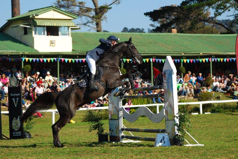 El caballo que salta - Shaun Neill imagenes de archivo