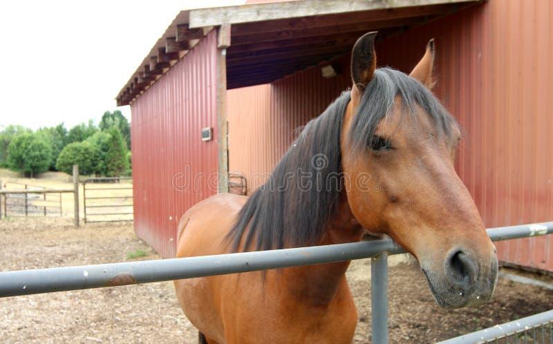 El caballo se introduce en una granja de Oregon fotos de archivo libres de regalías