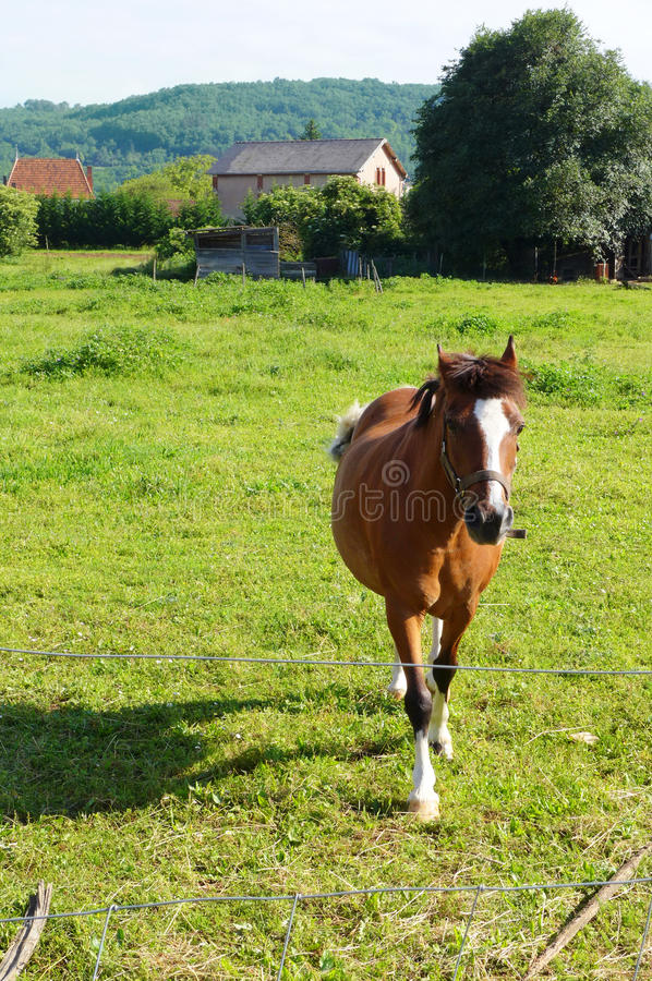 El caballo viene corriendo al espectador en campo fotografía de archivo