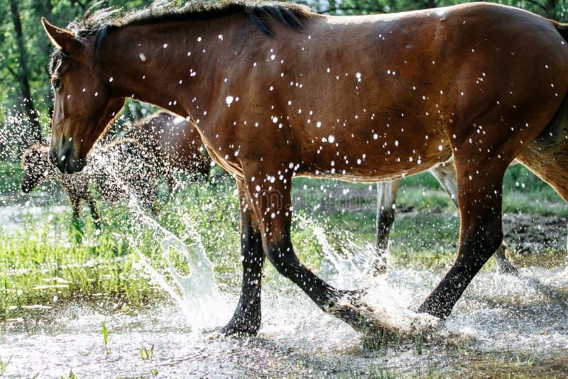 El caballo vino al r?o beber el agua imagenes de archivo