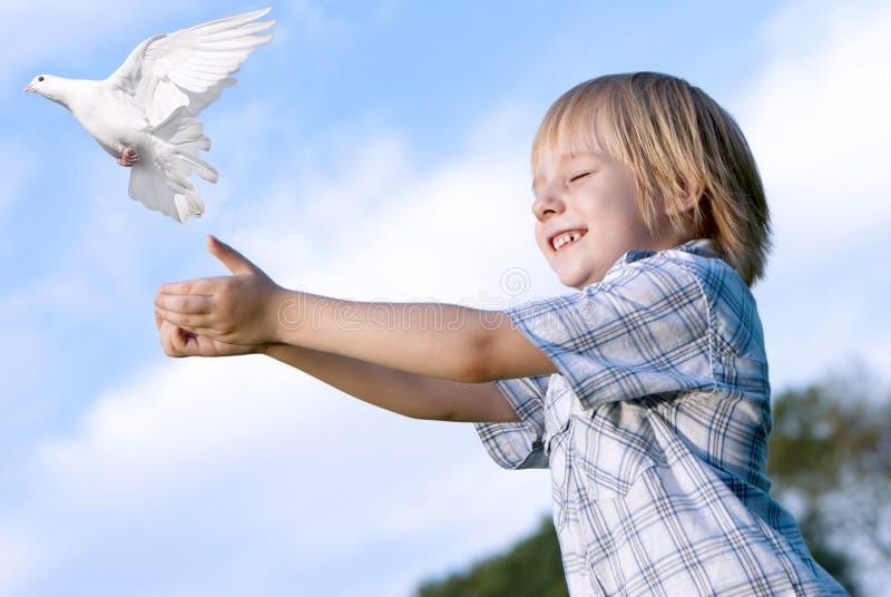 El cabrito y la paloma blanca fotos de archivo